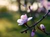 Gróf Degenfeld - Tavaszi birtokfotózás Tokaj-hegyalja