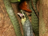 snake-eats-bat-thailand-pwsdesign-009