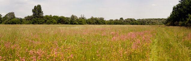 Panorámafotó - Tavaszi mező - PWSDesign