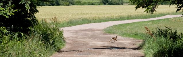 Sárospatak, Tengerszem, Károlyfalva biciklitúra