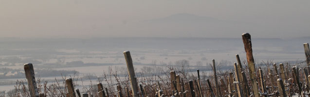 Vineyards in winter at Tokaj-hegyalja